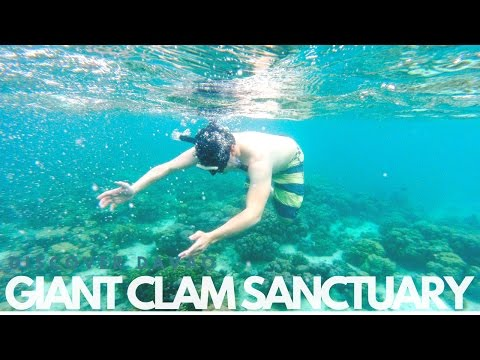Discover Davao : Giant Clam Sanctuary