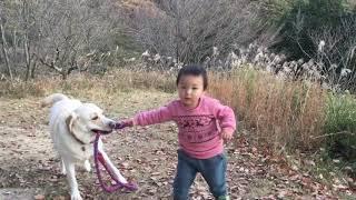 ラブラドール #お散歩 #子供.