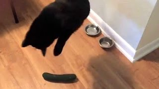 Cat VS Cucumber 😂 (HD) [Funny Pets]