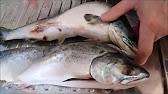 Как узнать, что рыба с икрой. Красная икра в подарок к рыбе. - YouTube