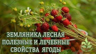 Земляника лесная. Полезные и целебные свойства ягоды.