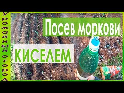 СУПЕР СПОСОБ ПОСЕВА МОРКОВИ КИСЕЛЕМ! | выращивание | урожайный | морковный | рассада | морковь | моркови | киселем | урожай | посева | огород