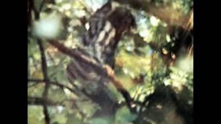 Claudio Rocchi - Essenza - SONO UN UOMO