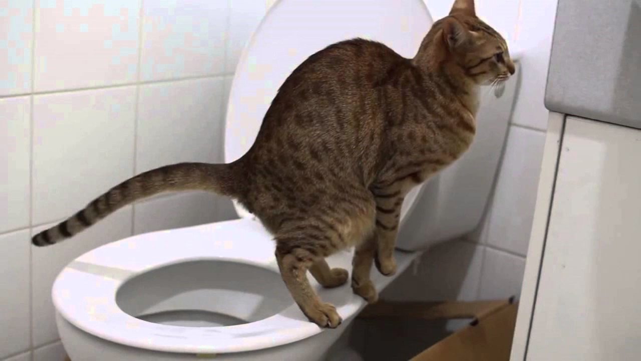 Болезни котов запор