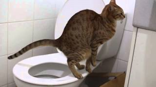 У кота запор, что делать?