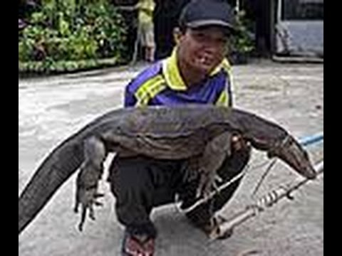 Bangkok varan lac parc lumpini