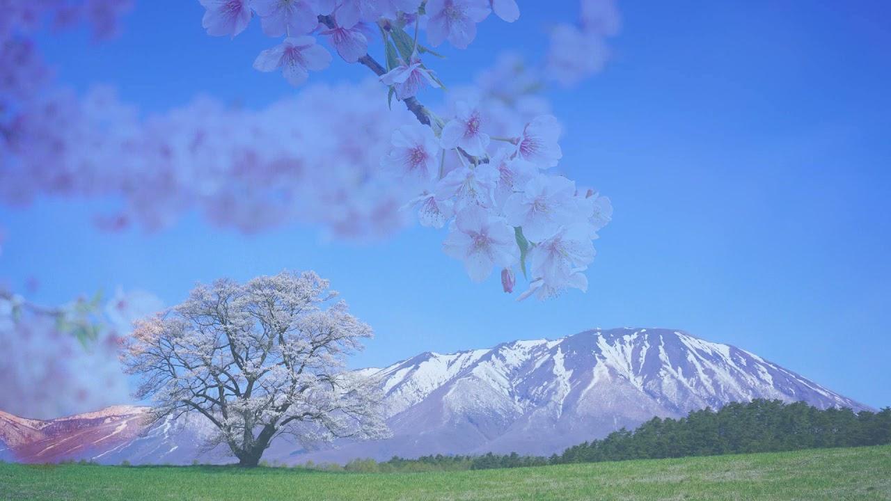 桜の名残に。。