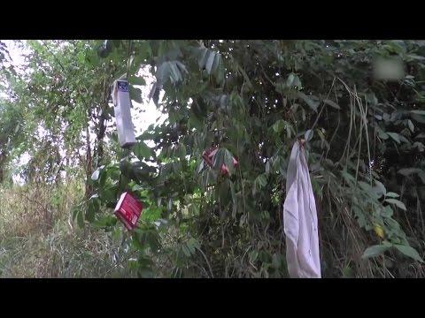Hutan 'Pemuas Nafsu'