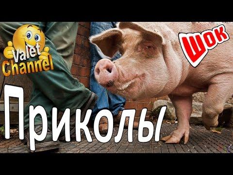 Новогодние сценарии на Новый Год, Novogodnie scenarii na