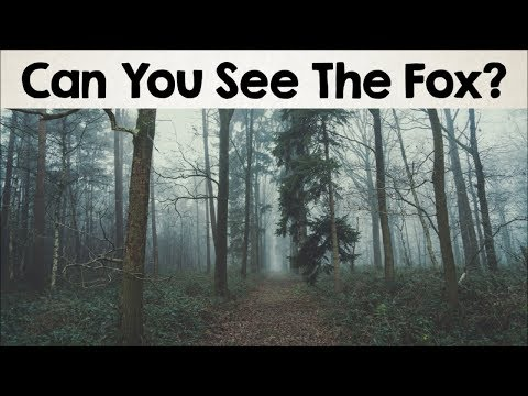 Thumbnail: Nobody Can See All The Hidden Animals । Optical Illusions । Brain Teasers [#2]