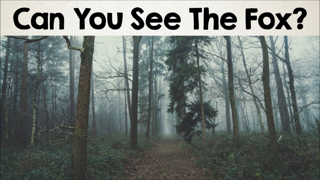 Nobody Can See All The Hidden Animals Optical Illusions Brain