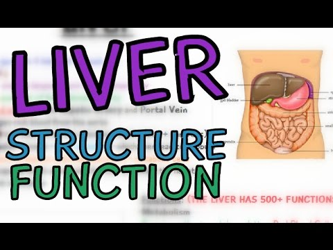Introduction To The Liver Structure And Function Youtube