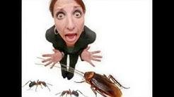 Bed Bug Behavior 321-250-9993 8501 Astronaut Blvd Cape Canaveral, FL 32920