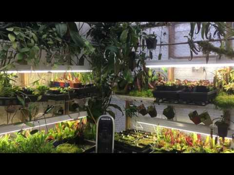 JANUARY HIGHLAND GREENHOUSE TOUR: ORCHIDS, CARNIVOROUS PLANTS, HOYA AND MORE1080p