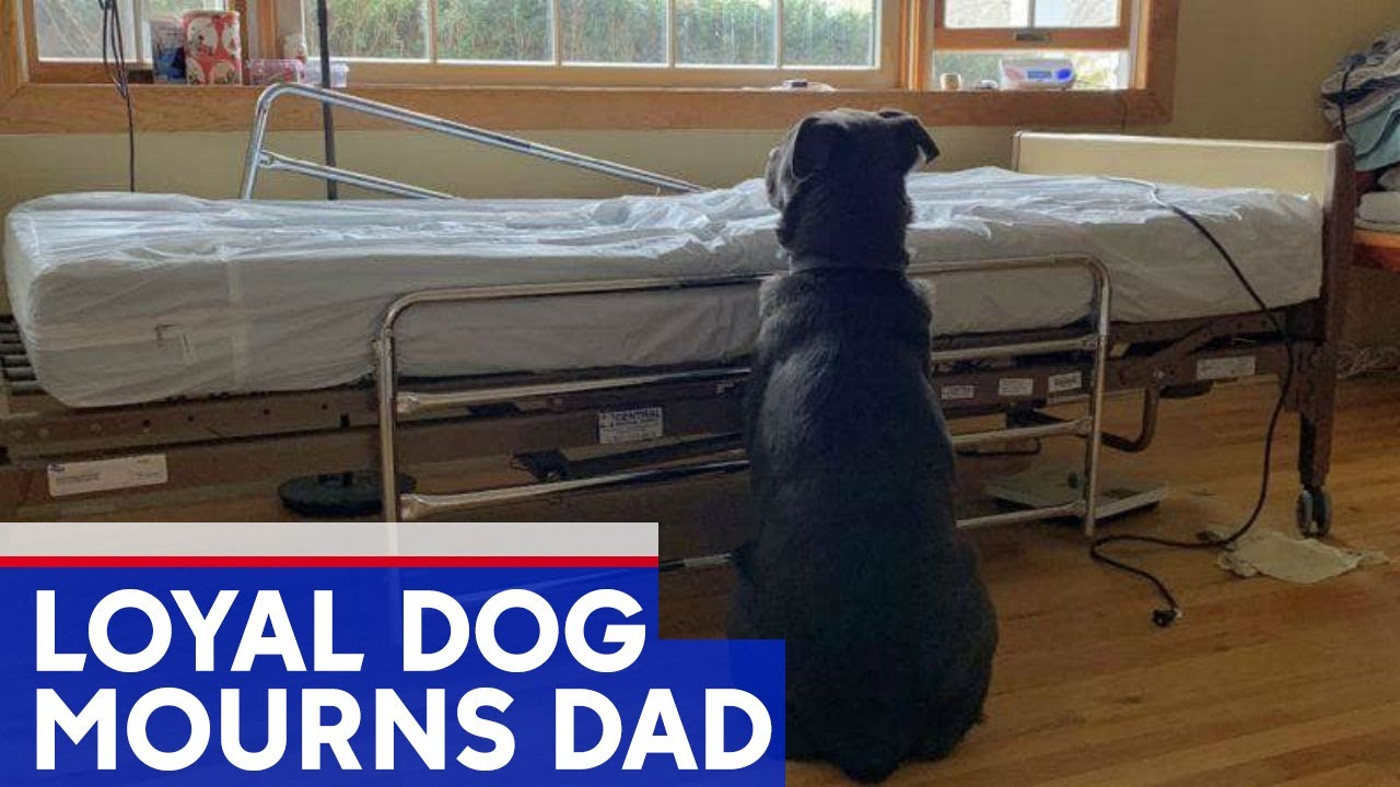 Heartbreaking photo shows dog at owner's empty hospital bed