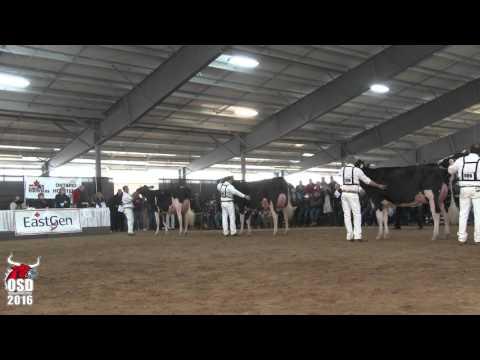 Intermediate Champion Holstein - Ontario Spring Discovery 2016