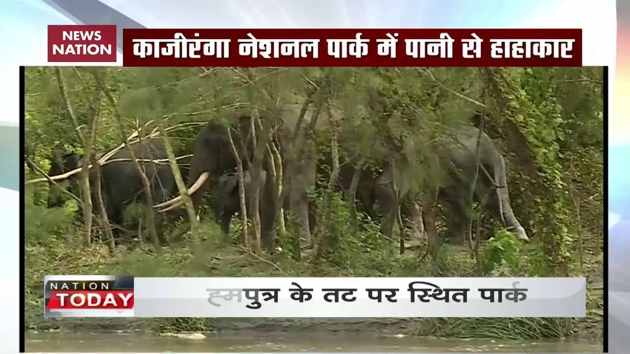 Assam flood: Here's how animals of Kaziranga National Park suffer