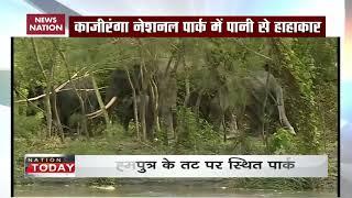 Assam flood: Here's how animals of Kaziranga National Park suffer