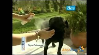 Shampoing Héry pelage noir pour chien