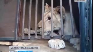 Законопроект о содержании диких животных