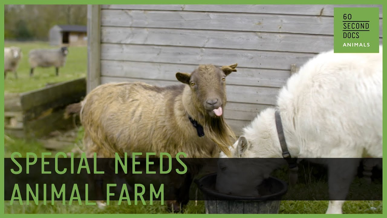 Life On A Special Needs Animal Farm