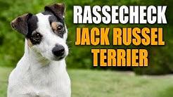 Rassecheck - Jack Russell Terrier , Parson Russell Terrier - Rasseportrait -  Hundeschule STADTFELLE