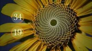 Evrenin Sırları Ve Matematik.