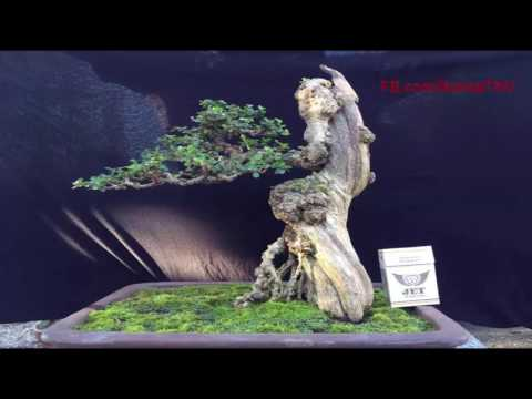 Artistic bonsai converge many bonsai works of artisans in the world