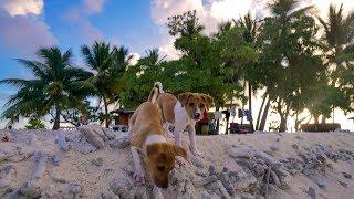 ミクロネシア連邦チューク州 トラック環礁の小さな島「ジープ島」には雄...