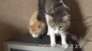 動画は去年からニコニコ動画で公開されているティガロビ生活記の動画に...