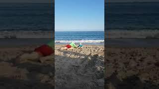 신대휘와 친구들 ㅡ아빠와 바다거북 놀이