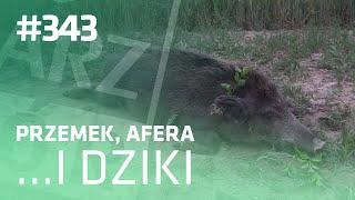 Darz Bór odc 343 - Przemek, Afera i dziki..