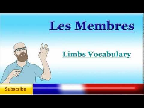 French Lesson 41 - Learn French Body Parts Vocabulary - Limbs