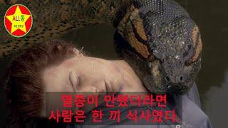 멸종이 안됐더라면 사람은 한 끼 식사였다. 세계에서 가장 큰 뱀 Titanoboa