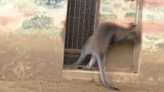 江戸川区 自然動物園にて。 とても切なそうでした。