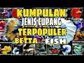 KUMPULAN JENIS IKAN CUPANG TERPOPULER | Spesies Betta Fish | Jenis Ikan Laga 2019