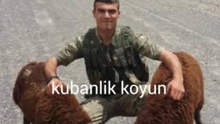 Diyarbakir lice tapantepe 95 / 3 DEVRELER
