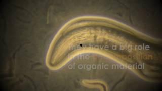 Nematodes: The Microscopic Roundworms
