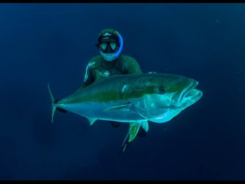 Spearfishing For Kingfish In New Zealand