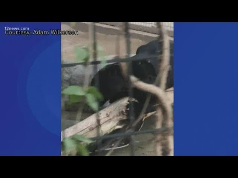 Woman attacked by jaguar at Wildlife World Zoo