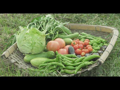"Sustainable agriculture ""Natural Farming"" Yoshikazu Kawaguchi"
