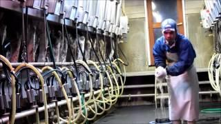 Arffi's work experiences at Ishii Dairy Farm in Hokkaido (