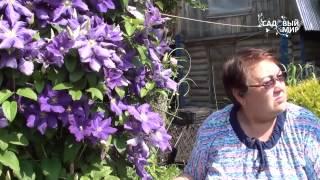видео Слива для Подмосковья посадка и уход, фото и описание сортов, выращивание и размножение, болезни и удобрения