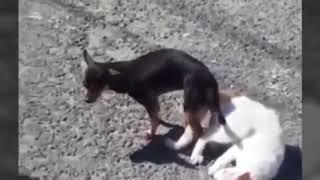 GILA.. Anjing Kawin Sama Kucing