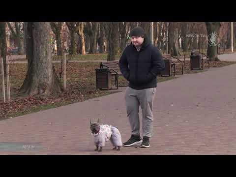 Телеканал Новий Чернігів: Чіпування домашніх тварин  Телеканал Новий Чернігів
