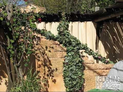 DeVine Comes Alive at Disney's Animal Kingdom