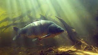 подводная охота на сазана маныч веселовское водохранилище трофейный сазан рыбалка на маныче 2021