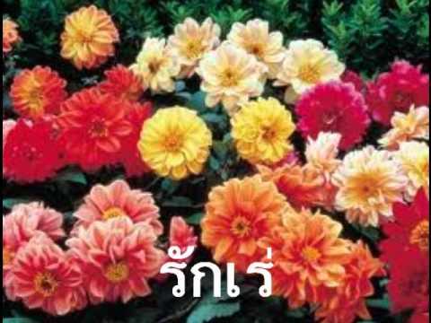 จิรญา จำเริญ   วิชาวิทยาศาสตร์ ป  ๒ เรื่อง พืชมีดอก