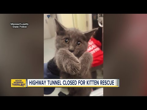 Kitten rescued after Massachusetts state troopers close down busy highway tunnel in Boston