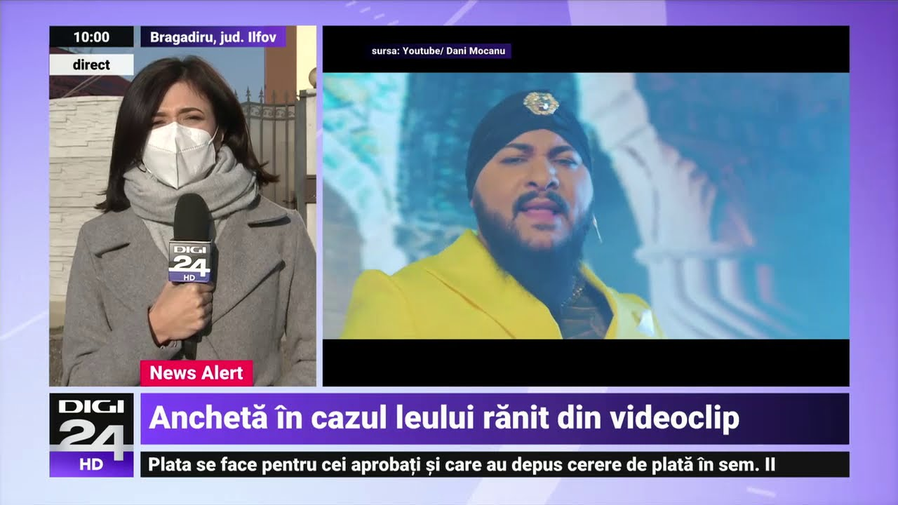 Percheziții la locuința manelistului Dani Mocanu, după videoclipul în care apare un leu rănit